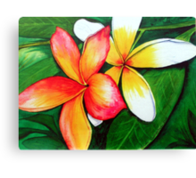 Frangipani Friends Canvas Print