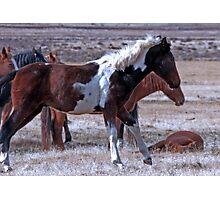 Cautious Mustangs Photographic Print