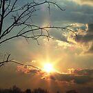 Sun Burst by Judi Taylor
