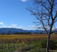 Wine Country by Jerry Stewart