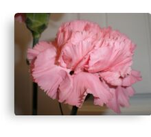 Pink carnation 2 Canvas Print