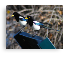 the two magpie greeters Canvas Print
