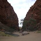 The Gorge palm valley by aggieeck
