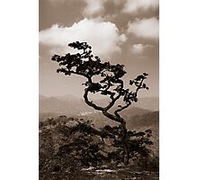 a lonely tree Photographic Print