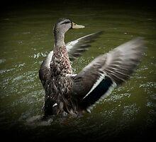 Duck by Luke Haggis