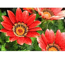 Vivid Orange African Daisy Digital Oil Painting Photographic Print