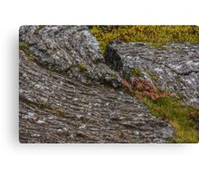 Wildflowers and Grasses in Rocky Ground, Iceland Canvas Print