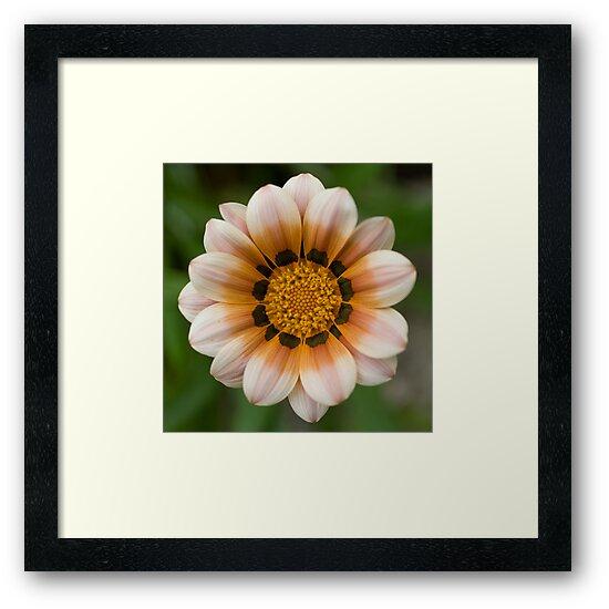 Flower by Luke Haggis