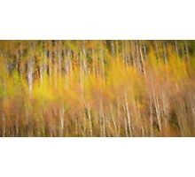 Autumn tones Photographic Print