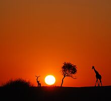 Giraffe sundowner by rrutten
