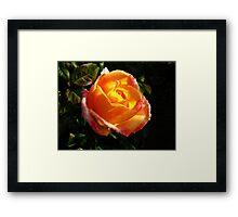 Sunlit Rose Framed Print