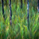 Sunlit ferns by Geraldine Lefoe