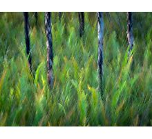 Sunlit ferns Photographic Print