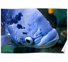 Blue Fish Poster