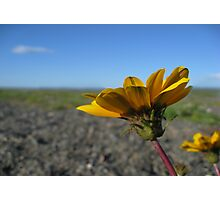 Napier flowers Photographic Print