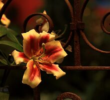 flower and gate by martinilogic