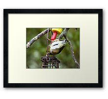 Cheers.. and Bottoms up!!... - Silver-Eyes - NZ Framed Print