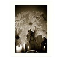 Petals and Light Art Print
