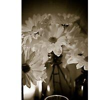 Petals and Light Photographic Print
