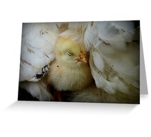 I Love My Feather Bed!! - Sussex Chick - NZ Greeting Card
