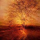Golden light by Geraldine Lefoe