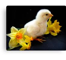 I'm A Little Daffodil Joy - Sussex Chick - NZ Canvas Print