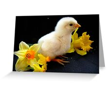 I'm A Little Daffodil Joy - Sussex Chick - NZ Greeting Card