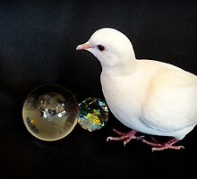 Gaze Into My Crystal Ball!! - White Dove - NZ by AndreaEL