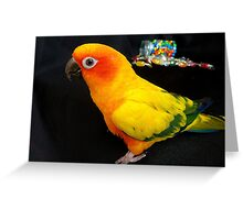 Who Spilt The Beans? - Sun Conure - NZ Greeting Card