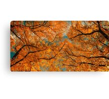 Clors Autumn Canvas Print