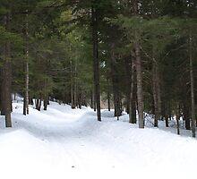 NC winter scene by Albert1000