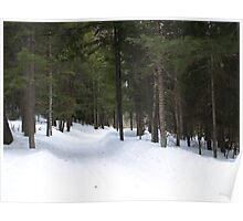NC winter scene Poster