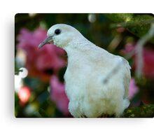 I Come In Peace! - Wild Dove - NZ Canvas Print