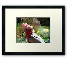 I Just Love Spring... Galah - NZ Framed Print