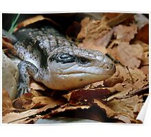 I'll Just Slide Past You... Blue Tongued Skink - NZ Poster