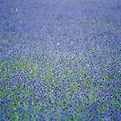 Blue by julie08