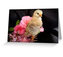 FLOWERS??...Is There Something You Want To Tell Me - Chick - NZ Greeting Card