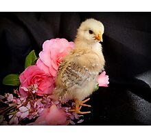 FLOWERS??...Is There Something You Want To Tell Me - Chick - NZ Photographic Print