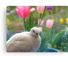 I Have A Sparkling Personality! - White Dove - NZ Canvas Print