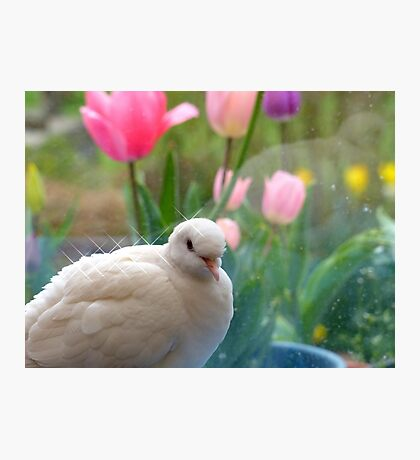 I Have A Sparkling Personality! - White Dove - NZ Photographic Print