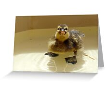 NO.... I'm Not Coming Out!!! - Mallard Duckling - NZ Greeting Card