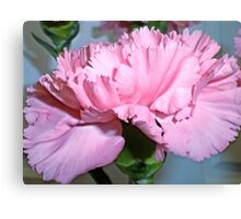 Pink carnation 3 Canvas Print