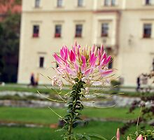 Flower at the Wawel - Poland by Mark Thomson