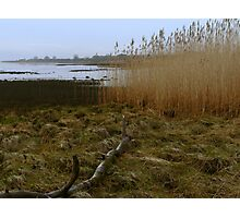 Kingoodie reed beds Photographic Print