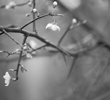 blossoms by MollyHenage