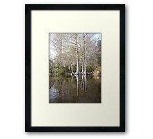Silver Trees and Knees Framed Print