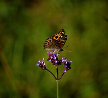 BUTTERFLY  by Cheryl Hall