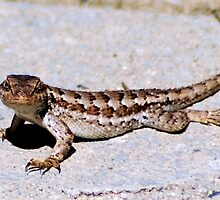 Lizzy, The Curious Alligator Lizard by Lenny La Rue, IPA