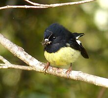 Look What I Got... Tom Tit - Stewart Island by AndreaEL