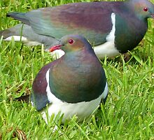 Join The Feast - Stewart Island Wild Wood Pigeon - Kererū  by AndreaEL